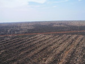 peatlands_4_small